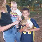 Petting Foster family pig